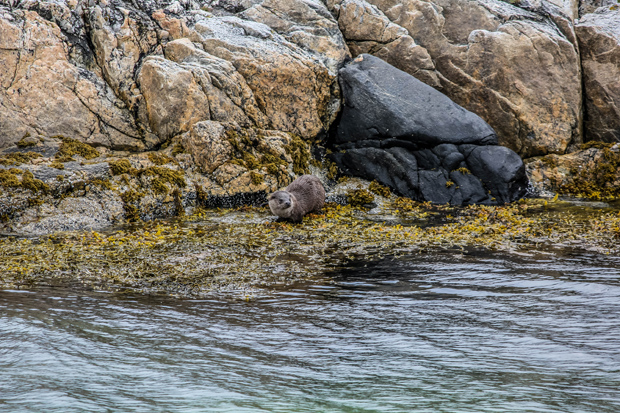 Otter Arctic Hotel